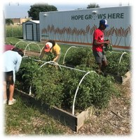 OSU Urban Horticulture Research and Extension Experience for Undergraduates
